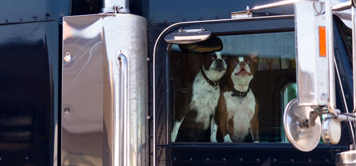 Tips for Trucking With a Dog